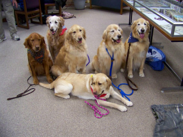 Therapy dogs waiting for students to arrive.