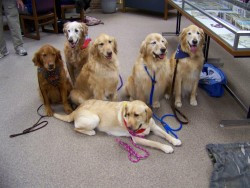 Therapy Dogs Tonight in Library