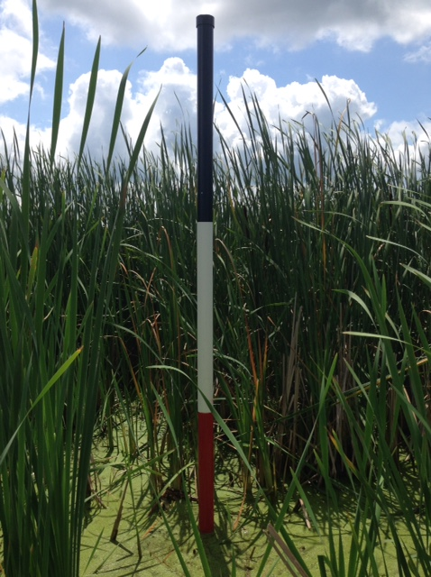 Cattail Measurement tool at Forest Hill Nature Area.