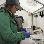 Alumna Studies Plastic Pollution in the Canadian Arctic