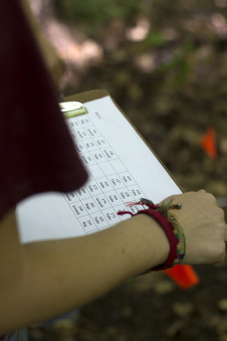 Students document the planting of tree seedlings at the Alma College Ecological Station.