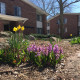 Spring flowers bloom in the garden outside Nisbet and Brazell halls.