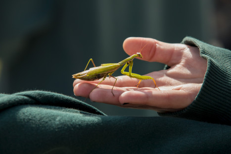 A student holds a praying mantis in the Conservation Park nature area.