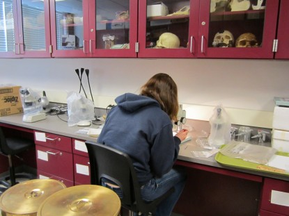 Students working in the lab with archaeological finds.