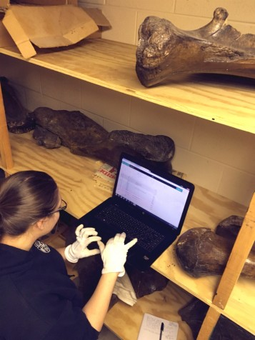 Anthropology major Ashleigh Strand works on curation and collections management.